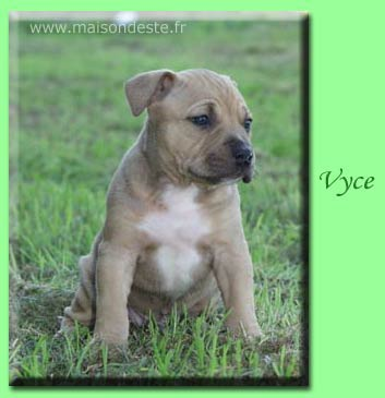 vyce